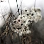 Fotobeitrag von Andreas Hannemann