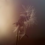 Fotobeitrag von Marco Nieschka