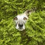 Auf den Hund gekommen | Hundefotografie mit Persönlichkeit